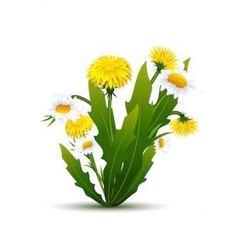 Bouquet di denti di leone e camomille con foglie