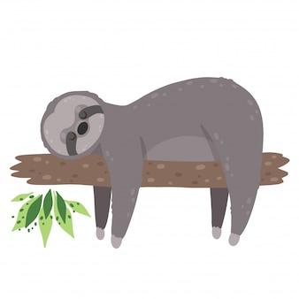 Bradipo addormentato sveglio isolato nella priorità bassa bianca.