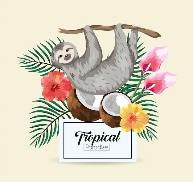 Bradipo con cocco tropicale ed etichetta con foglie