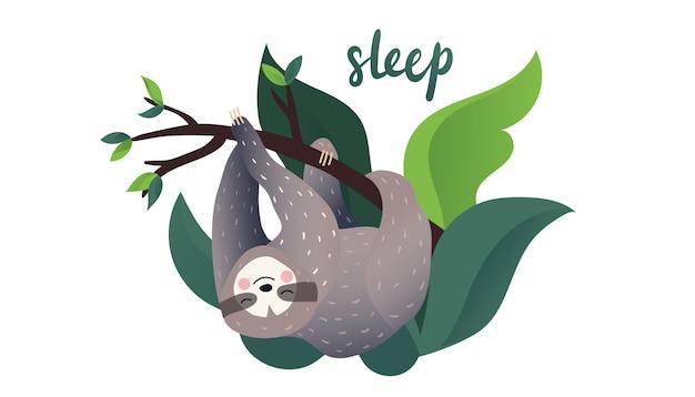 Bradipo pigro sveglio che dorme su un ramo dell'albero tropicale. lettering di tipo sonno. stile cartoon