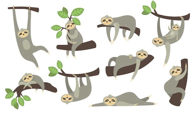 Bradipo sonnolento sveglio sul set di icone piatto ramo. personaggio dei cartoni animati di piccolo bradipo appeso, dormire, sdraiato o giocare con la raccolta di illustrazione vettoriale isolato bambino.