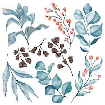 Brancges di eucalipto con bacche rosse e baccello