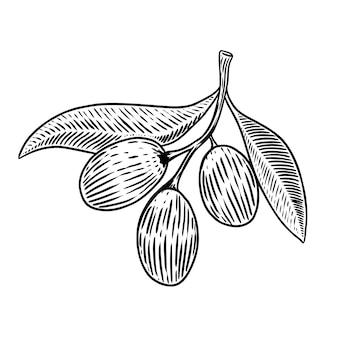Brunch verde oliva in stile incisione elemento per poster, carta, banner. illustrazione