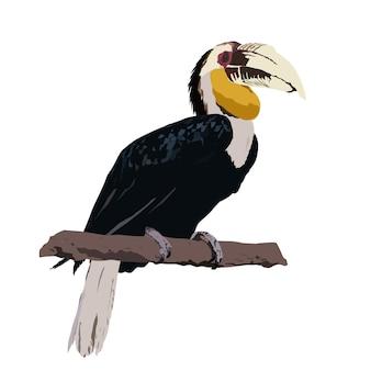 Bucero avvolto, illustrazione di vettore del bucero, isolata