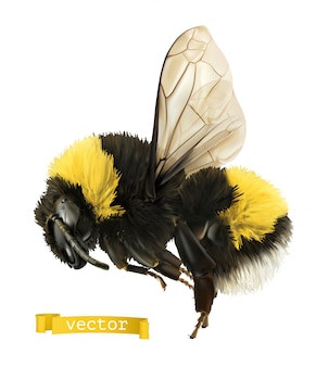 Bumblebee. 3d realistico