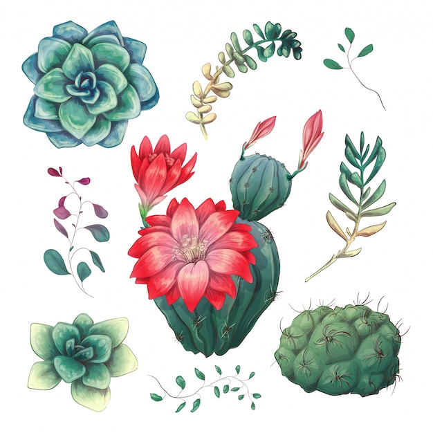 Cactus colorati disegnati a mano e set succulenti.