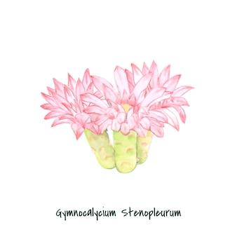 Cactus di stenopleurum di gymnocalycium disegnato a mano