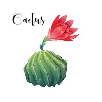 Cactus nel vettore e nell'illustrazione del deserto