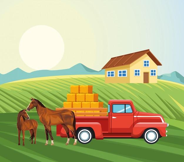 Camioncino scoperto dei cavalli della fattoria con le balle del prato del fieno