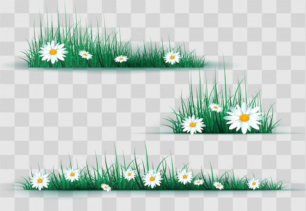 Camomille ed erba verde sul glade