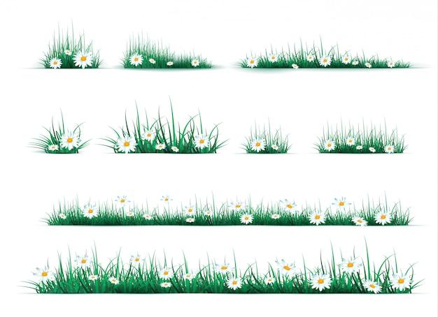 Camomille sulla radura nella foresta