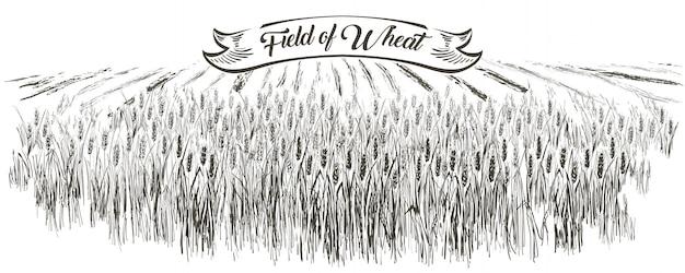 Campo di grano paesaggio rurale. illustrazione disegnata a mano di stile dell'incisione del paesaggio della campagna di vettore.