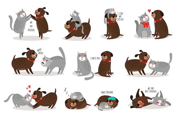 Cane e gatto insieme