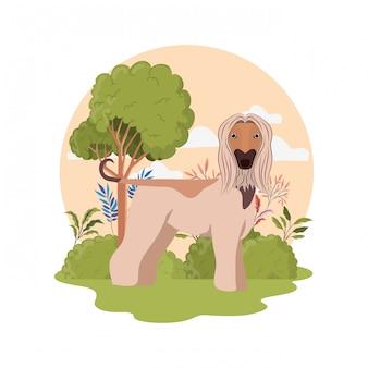Cane sveglio dell'afgano di galgo su bianco