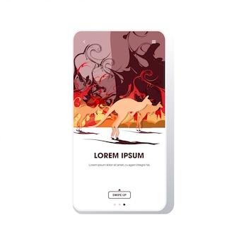 Canguro in esecuzione da incendi boschivi in australia animali che muoiono in incendi boschivi che bruciano alberi bruciore naturale concetto intenso arancione fiamme telefono schermo mobile app