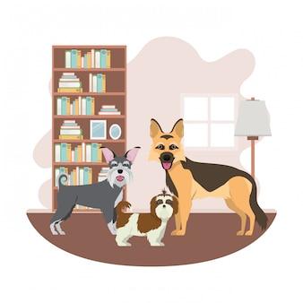 Cani carini e adorabili in salotto