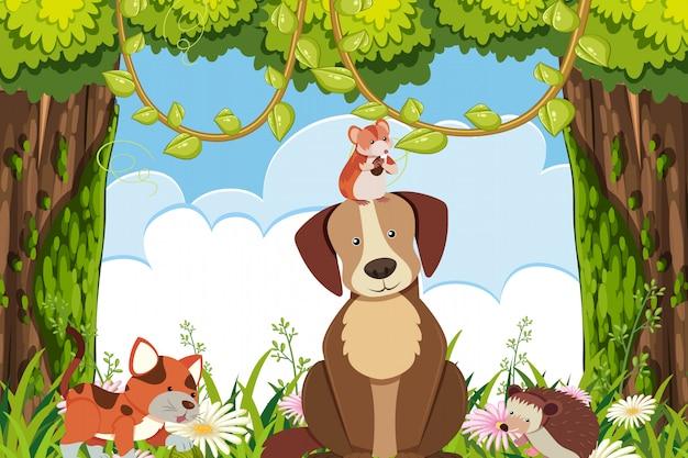 Cani e gatti nella scena della giungla