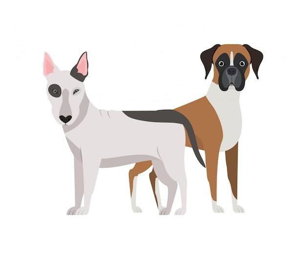 Cani svegli e adorabili su bianco