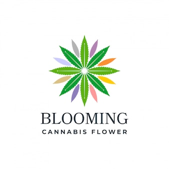 Cannabis in fiore