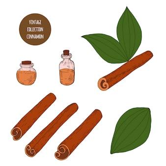 Cannella. insieme disegnato a mano di vettore delle piante cosmetiche isolato