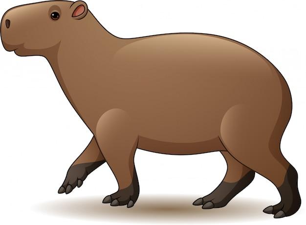 Capybara isolato su sfondo bianco