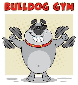 Carattere della mascotte del fumetto del bulldog con gli occhiali da sole che risolve con i dumbbells.