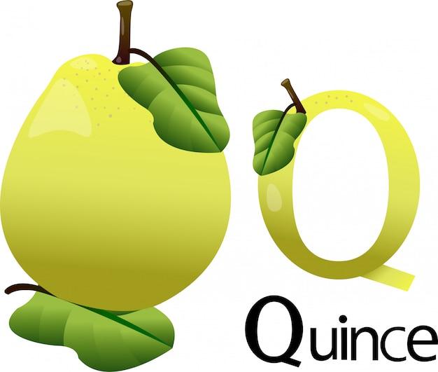 Carattere di illustrator q con mela cotogna
