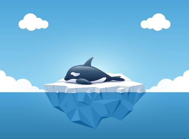 Carino orca che dorme sull'iceberg