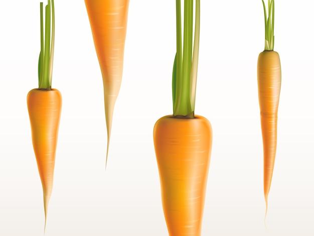 Carote fresche realistiche 3d isolate sulle verdure arancio della priorità bassa bianca.