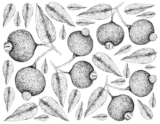 Carta da parati disegnata a mano dei frutti di guabiju su fondo bianco