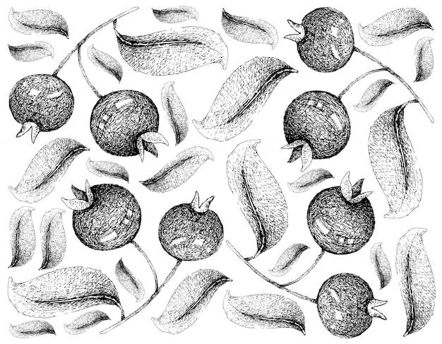 Carta da parati disegnata a mano della ciliegia di grumichama su fondo bianco