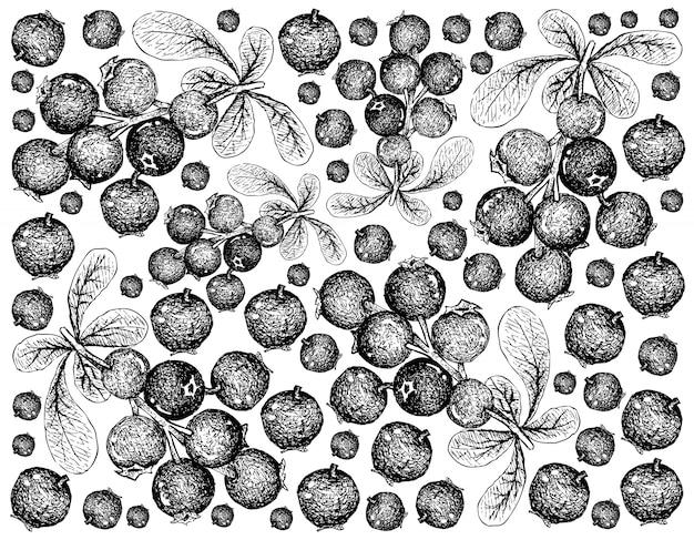 Carta da parati disegnata a mano di lingonberries maturi su fondo bianco