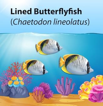 Carta di pesce farfalla allineata
