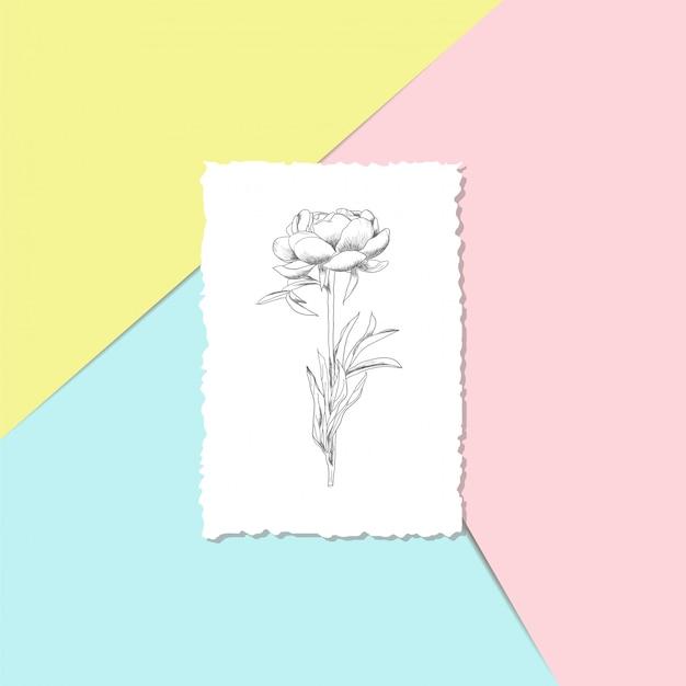 Cartolina con una peonia