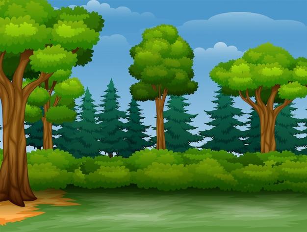 Cartone animato di alberi vista in una foresta