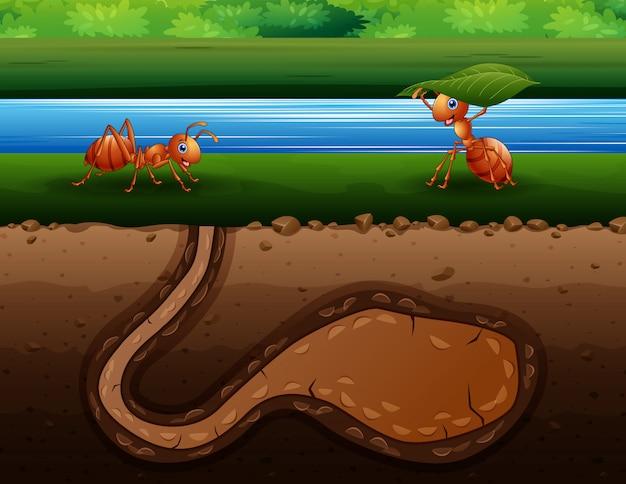 Cartone animato di formiche che striscia nel buco