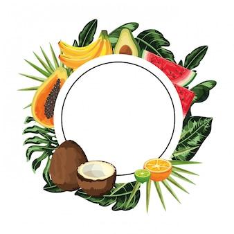 Cartone animato di frutta tropicale