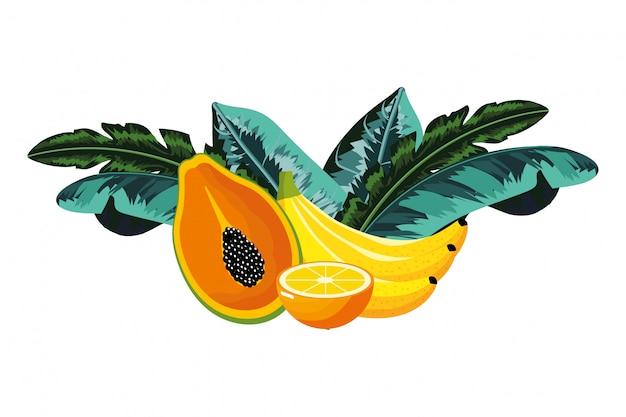 Cartone animato di frutti tropicali