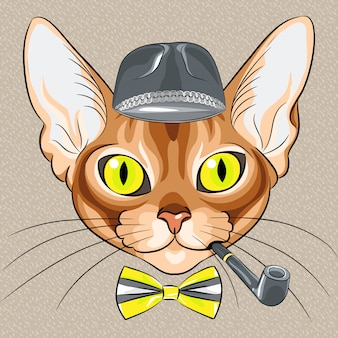 Cartone animato hipster gatto rosso razza abissina