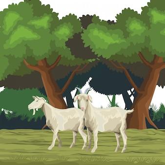 Cartone animato icona di capra