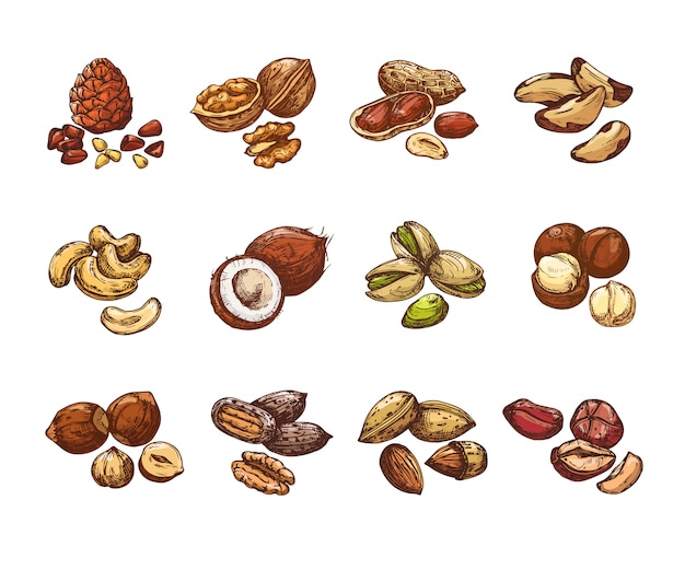 Cartone animato noci e semi. nocciola e cocco