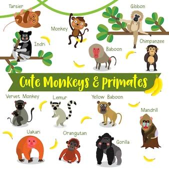 Cartone animato scimmia e primate con nome animale