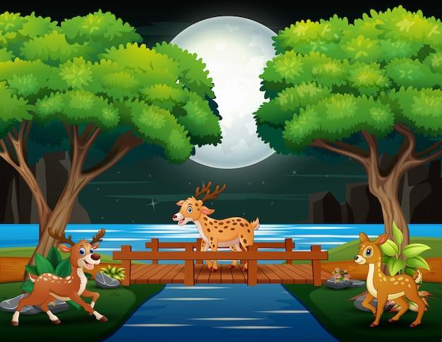 Cartoni animati di cervi che giocano nella scena notturna
