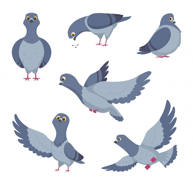 Cartoon set di piccioni divertenti. illustrazioni di uccelli