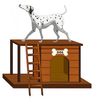 Casa per cani con cane carino in piedi
