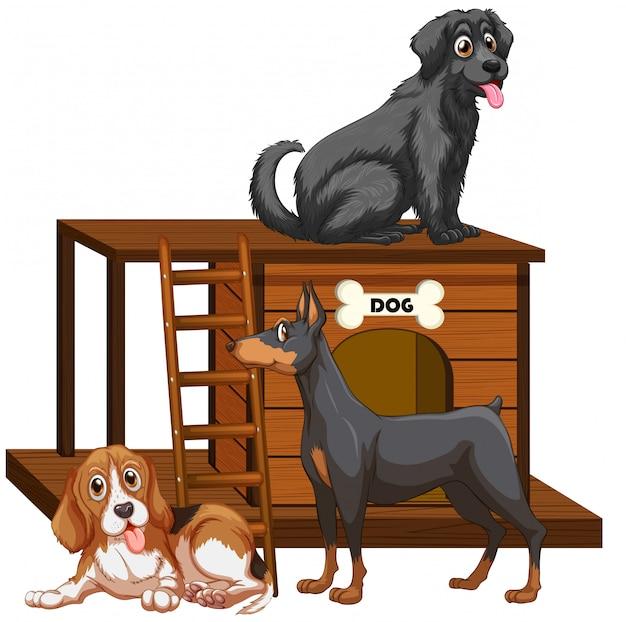 Casa per cani con simpatici cani