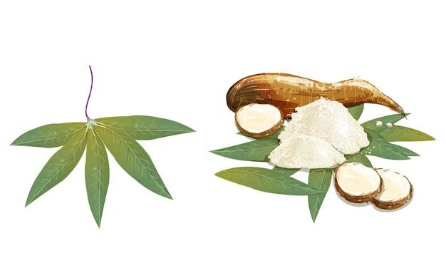 Cassava02