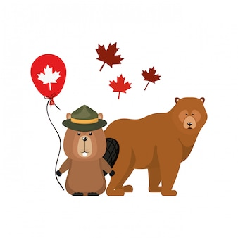 Castoro e orso animale del canada
