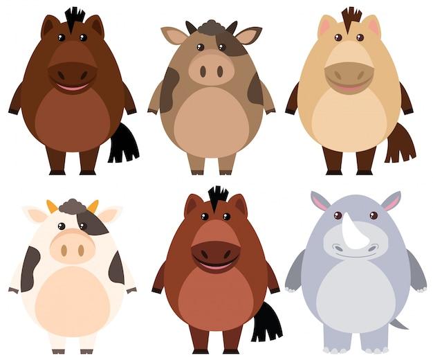 Cavalli e mucche con facce felici