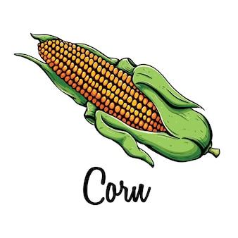 Cereale maturo sulla pannocchia con testo o nome e utilizzando la colorazione stile doodle su sfondo bianco